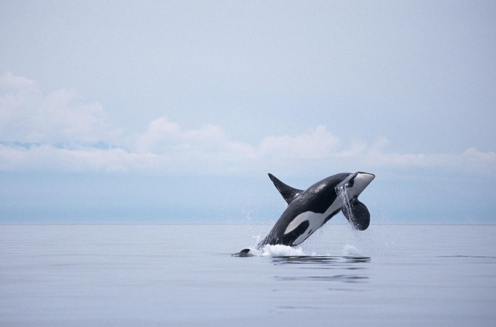 free whale wallpaper 23649