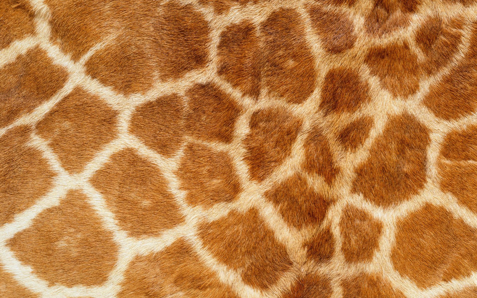 Giraffe Pattern 11460 1920x1200 px ~ HDWallSource.com
