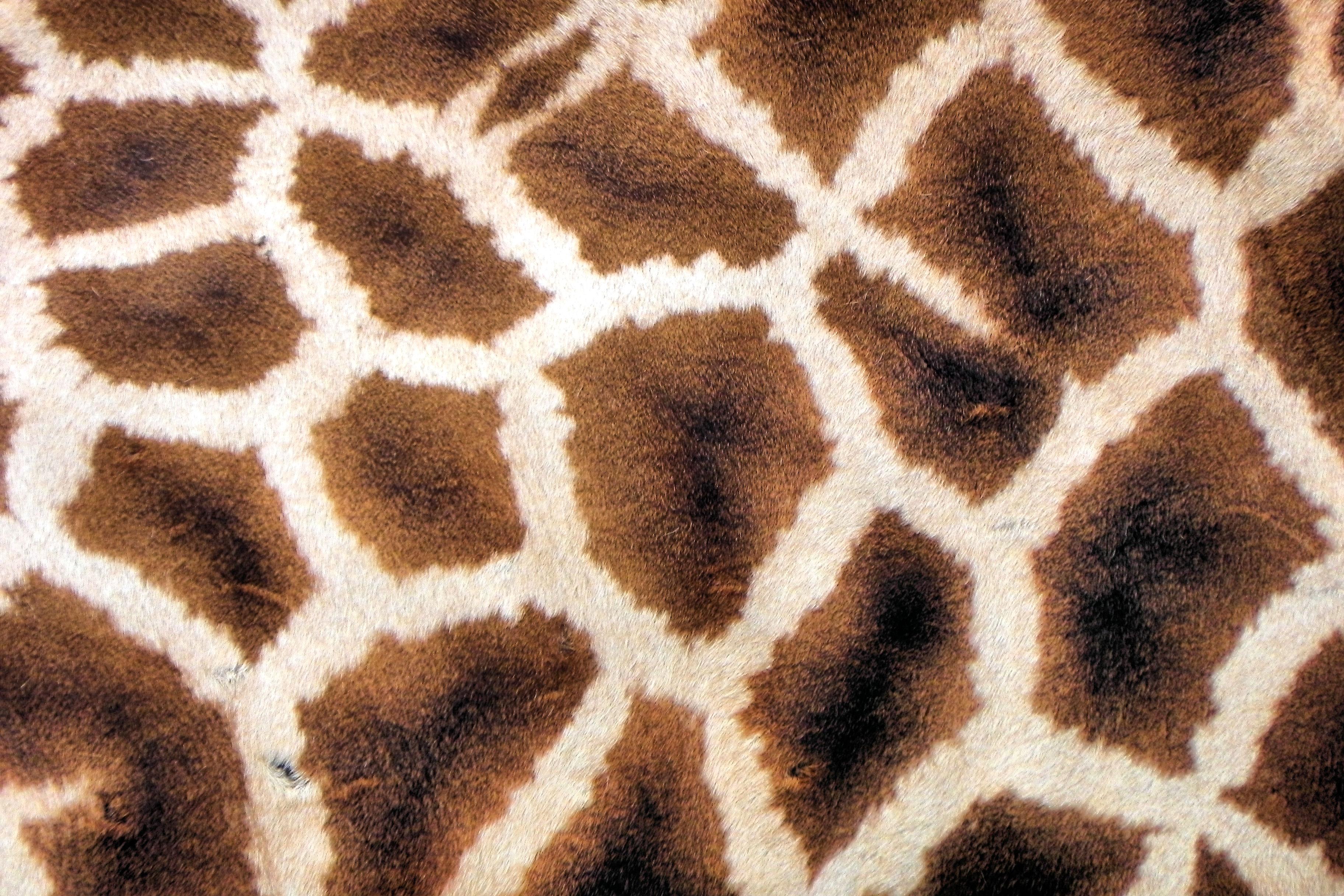 animal skin patterns giraffe - photo #19