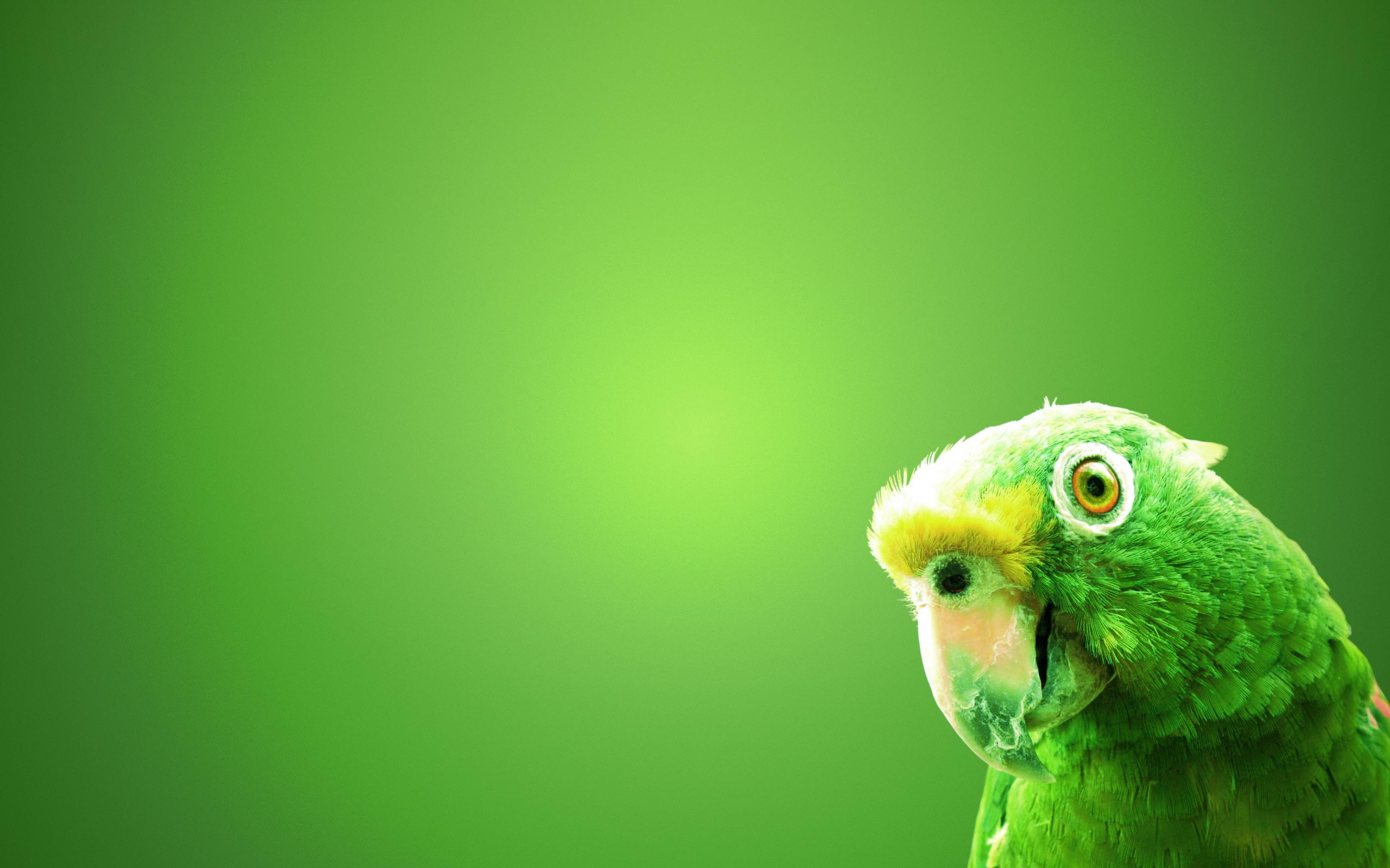 green parrot wallpaper 19876