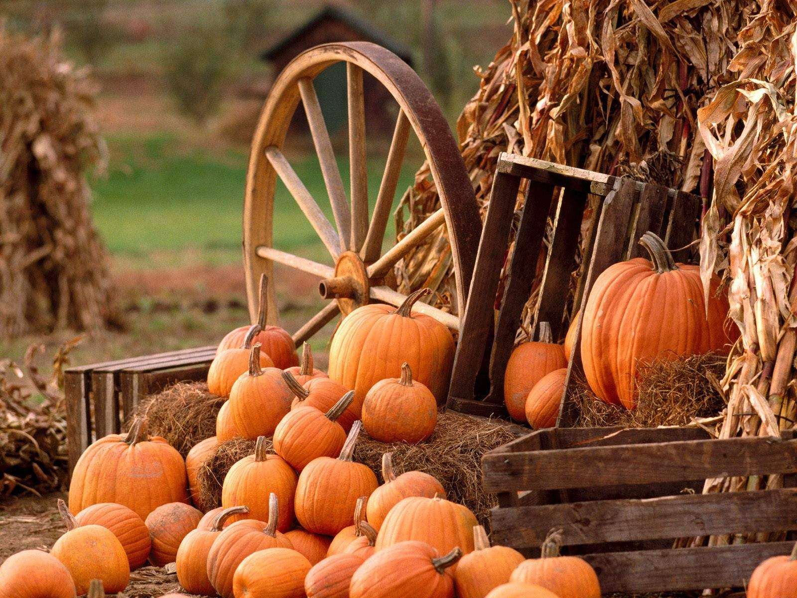 harvest pictures 37764