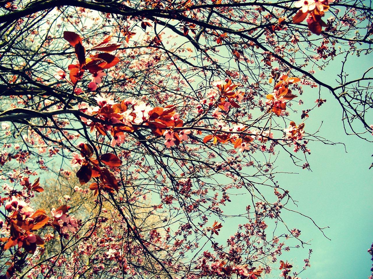 Unduh 56+ Background Tumblr Vintage HD Paling Keren