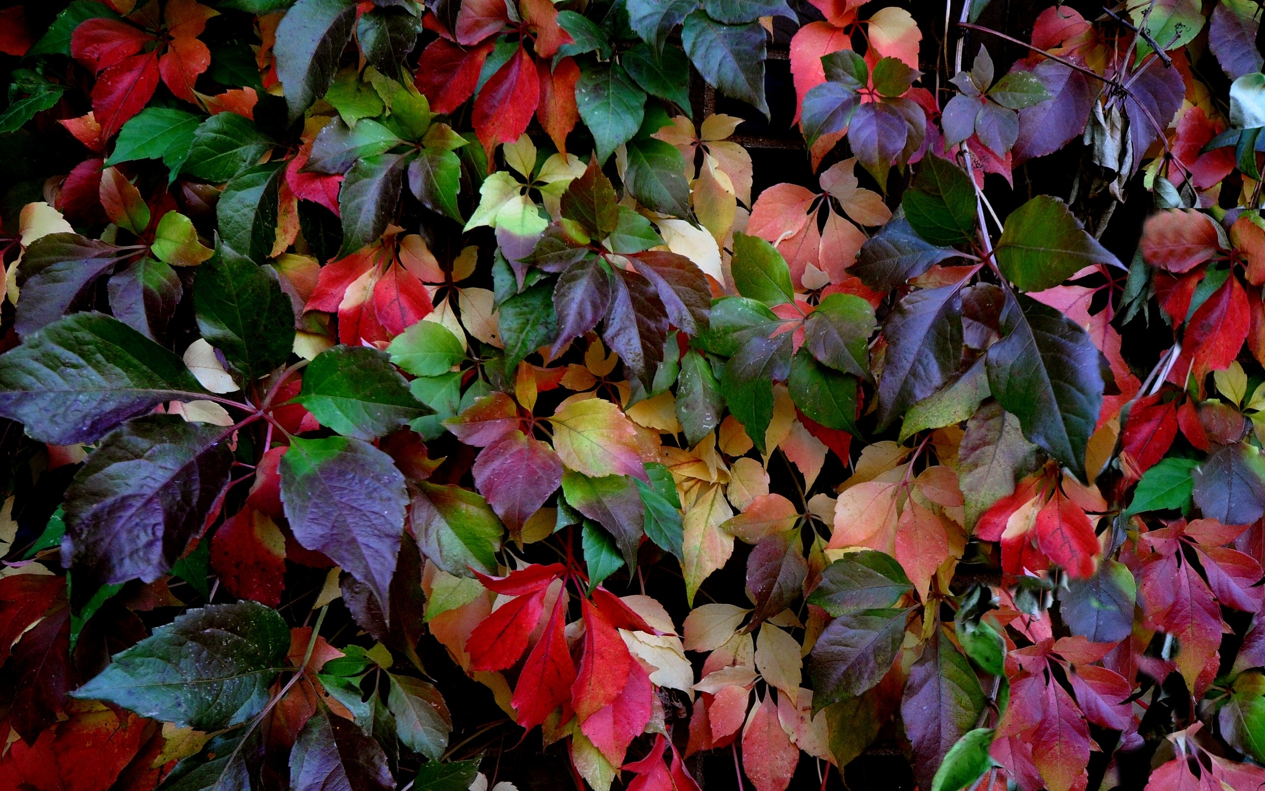 lovely colorful leaves 30086