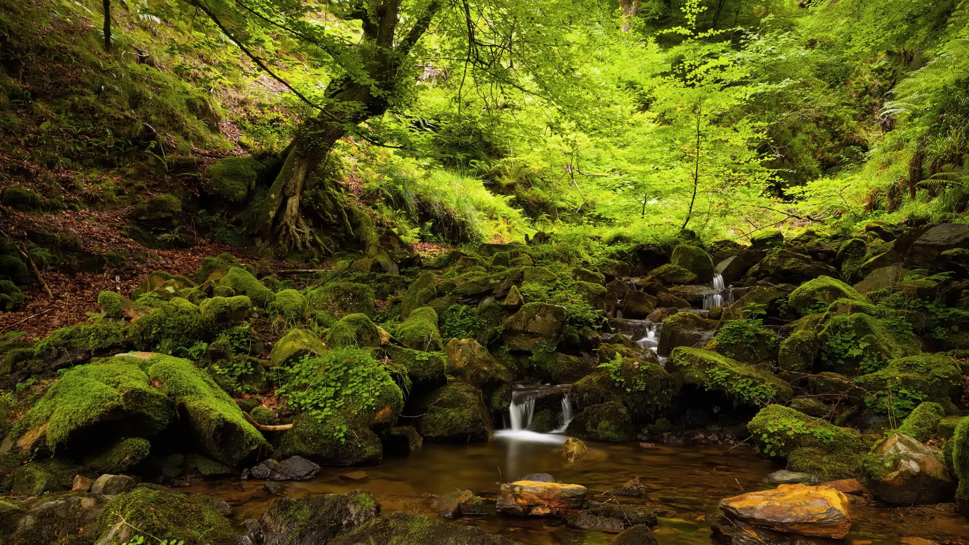 lovely forest stream wallpaper 34444