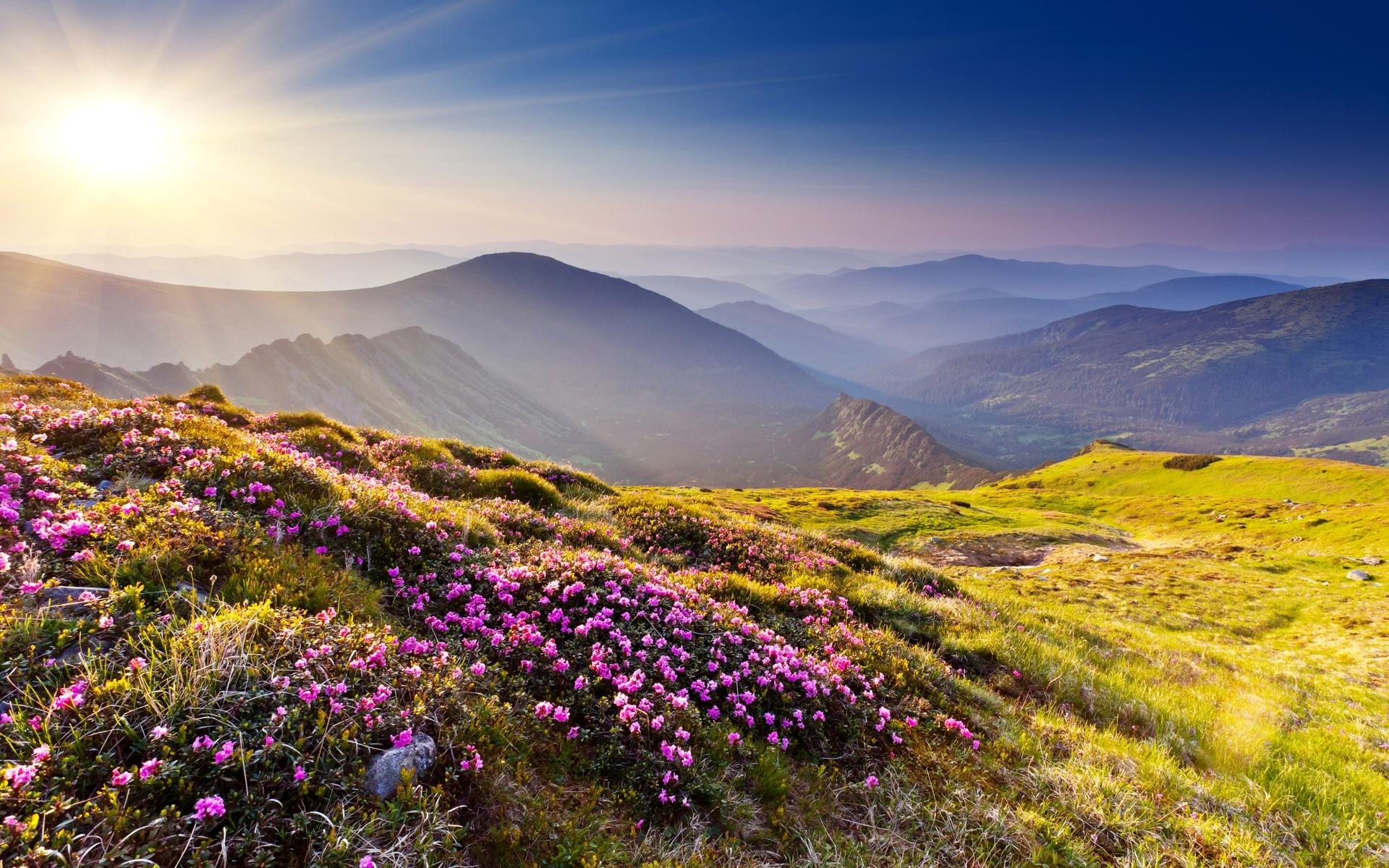 mountain meadow wallpaper 33439