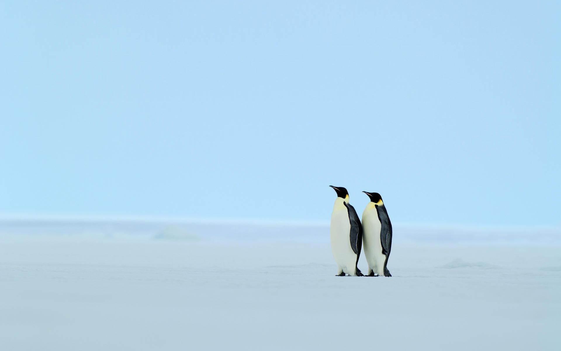 penguin wallpaper 13736