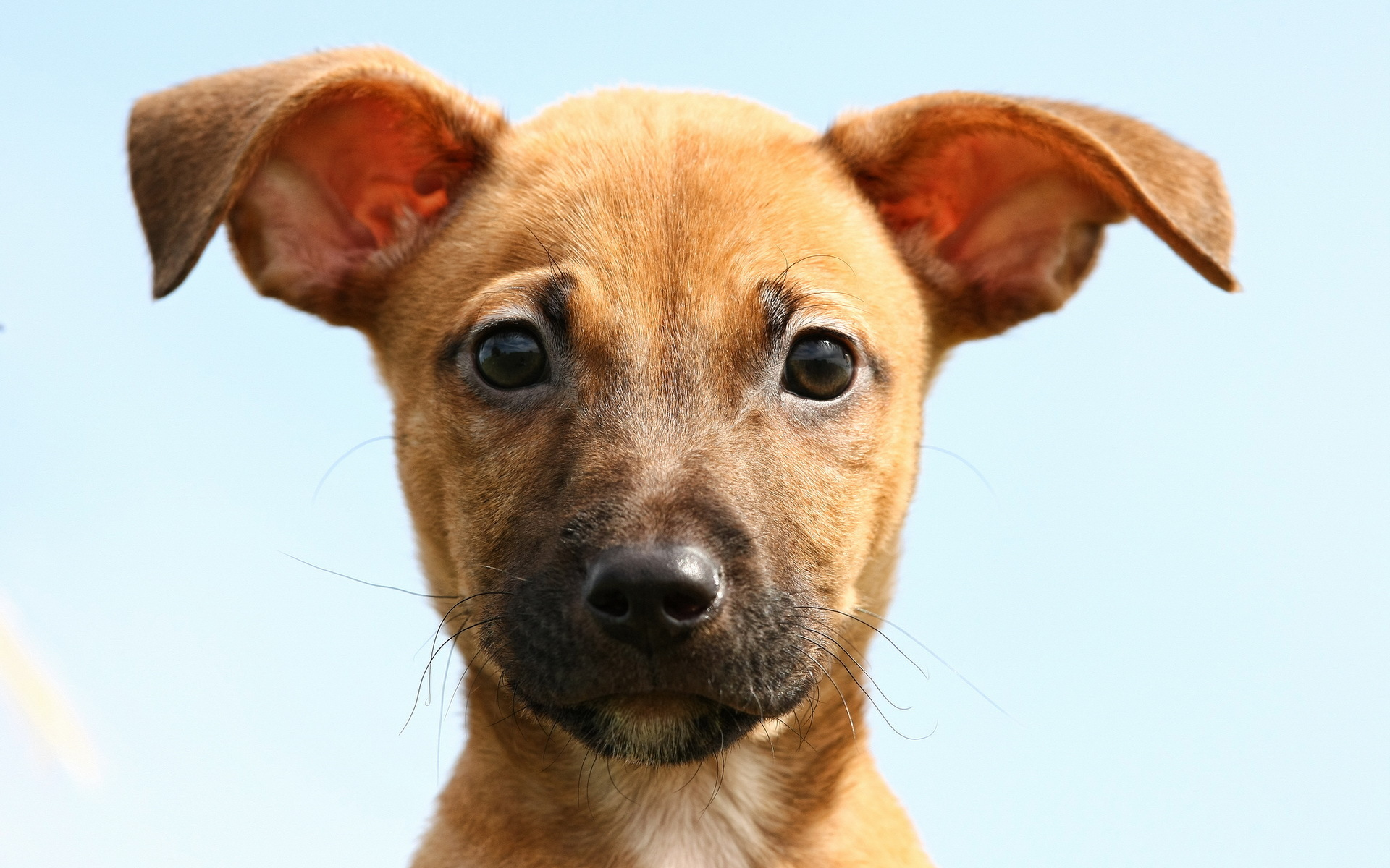 live puppy wallpaper