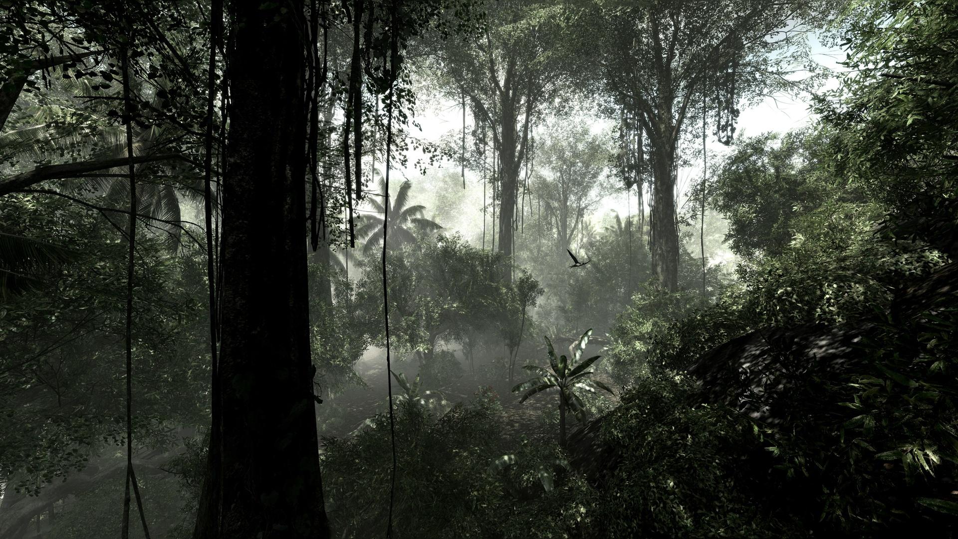 rainforest wallpaper 24475