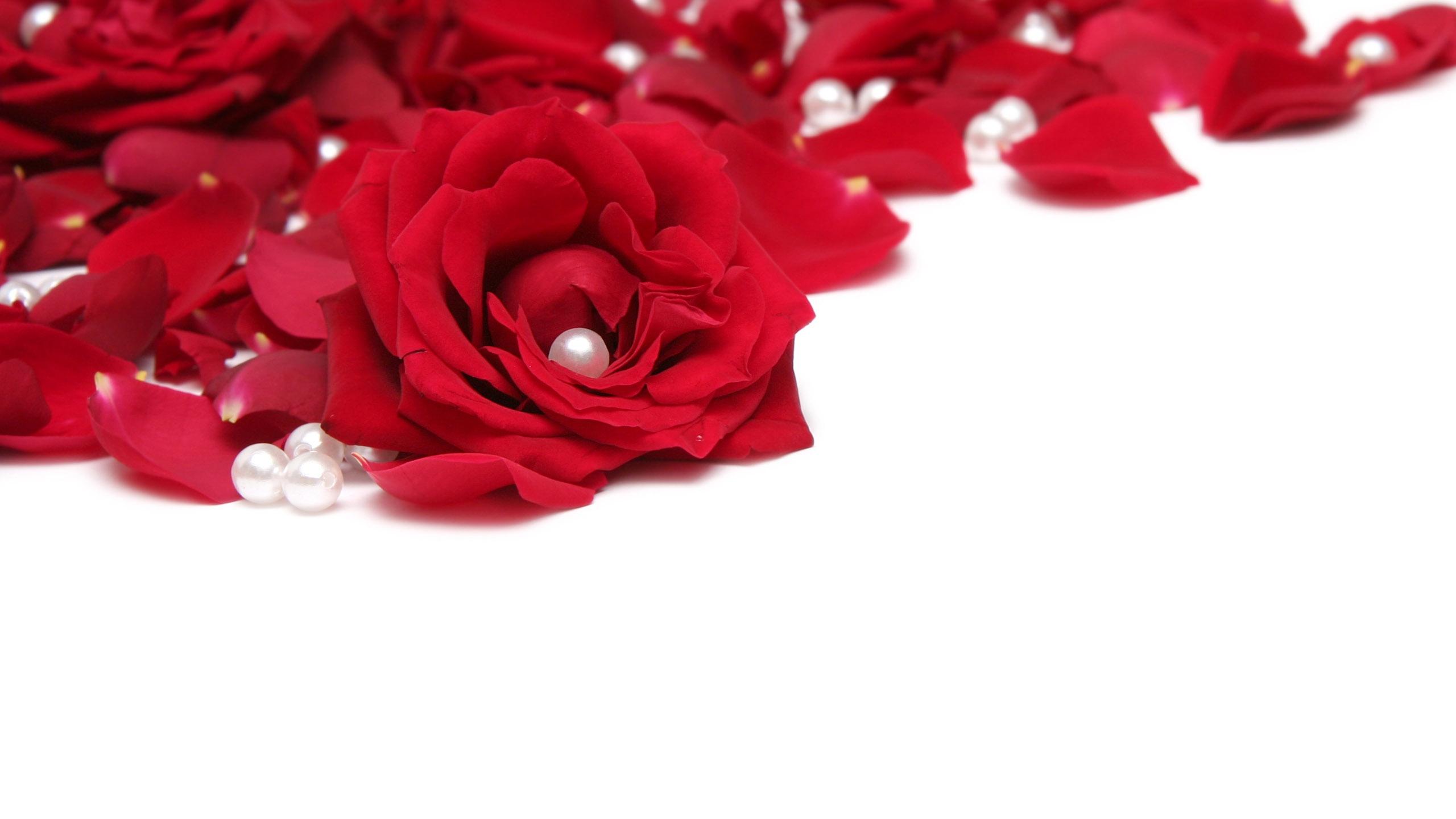 red flower petals 25876