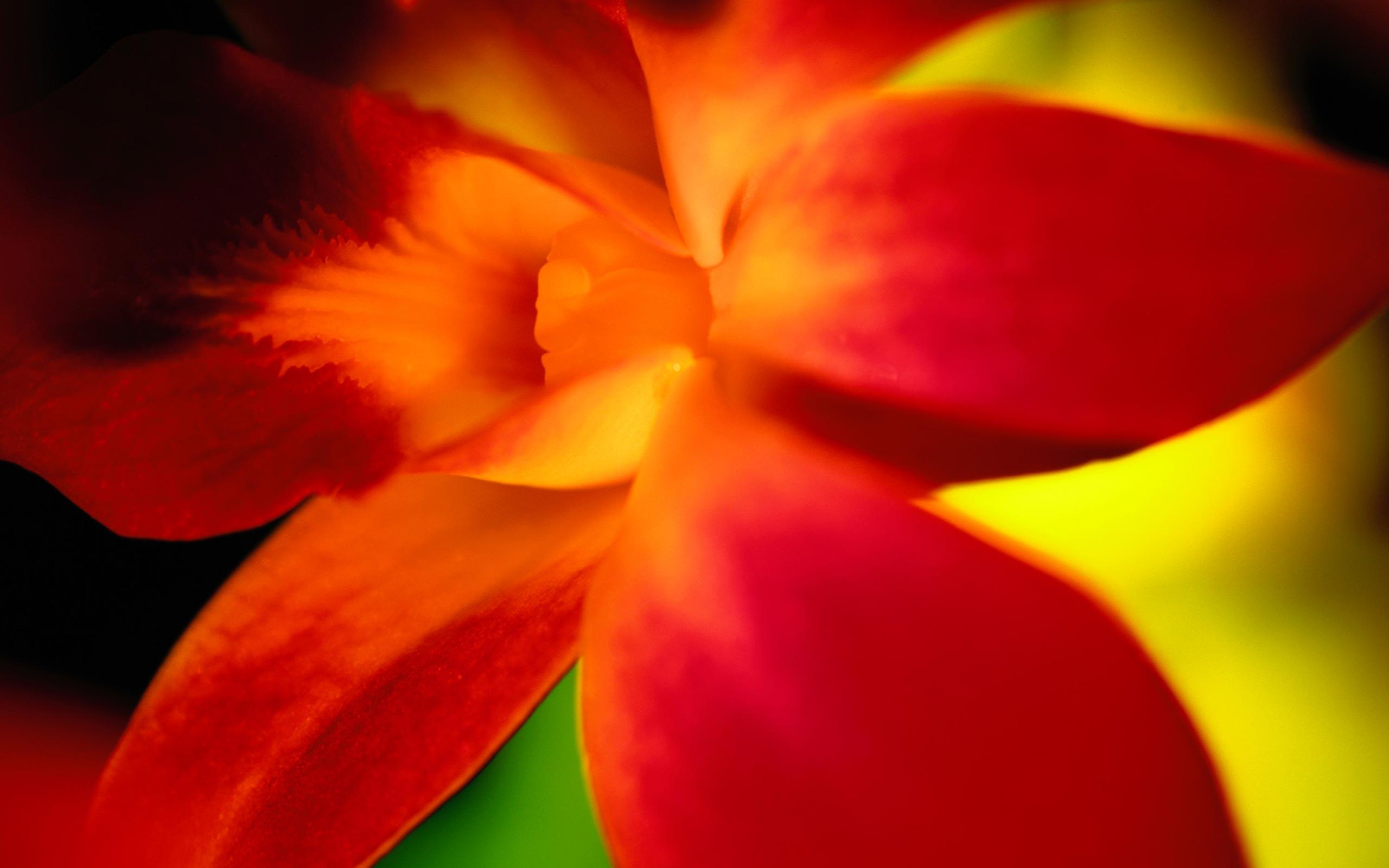 red flower petals 25892