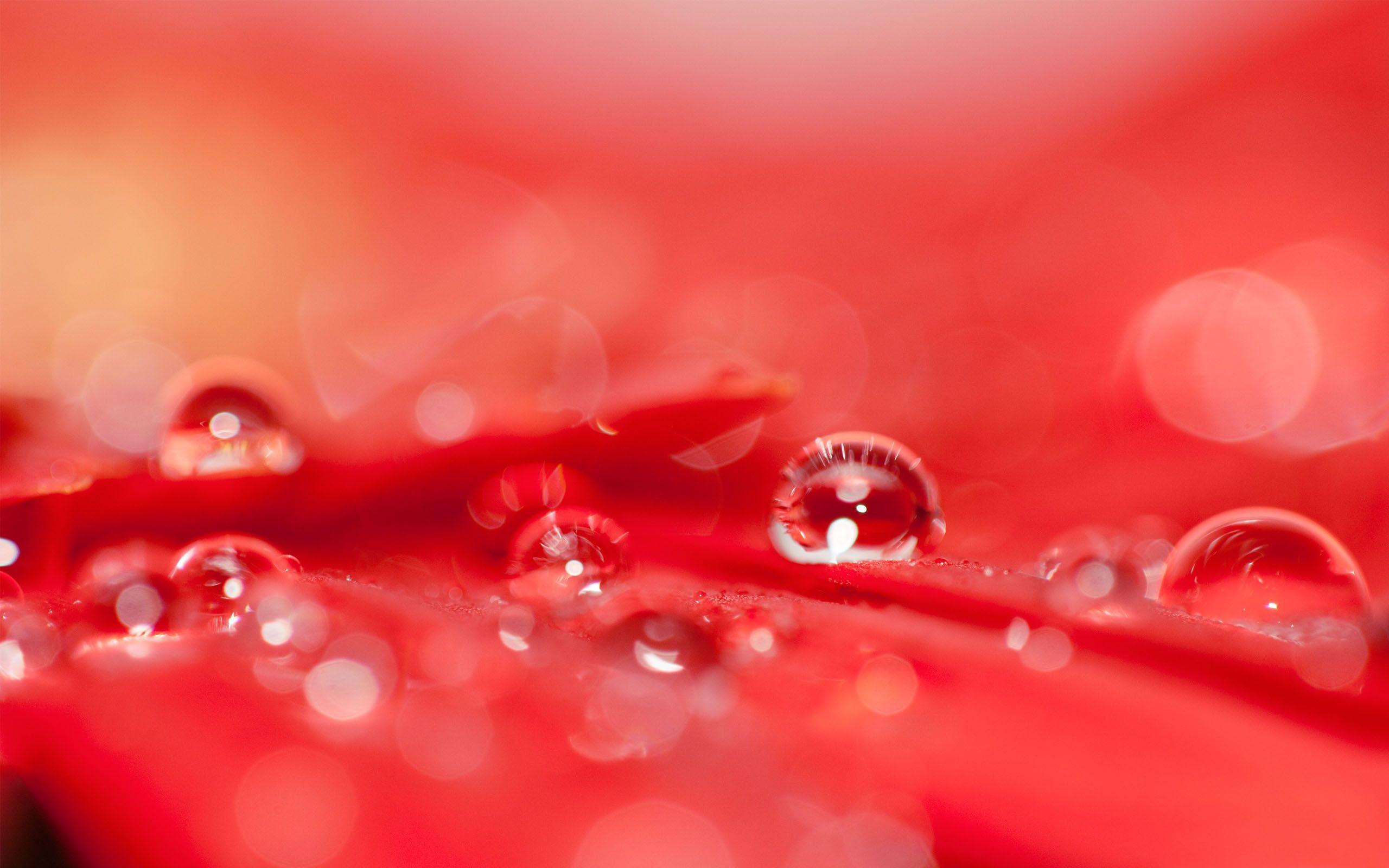 red flowers wallpaper hd 33703