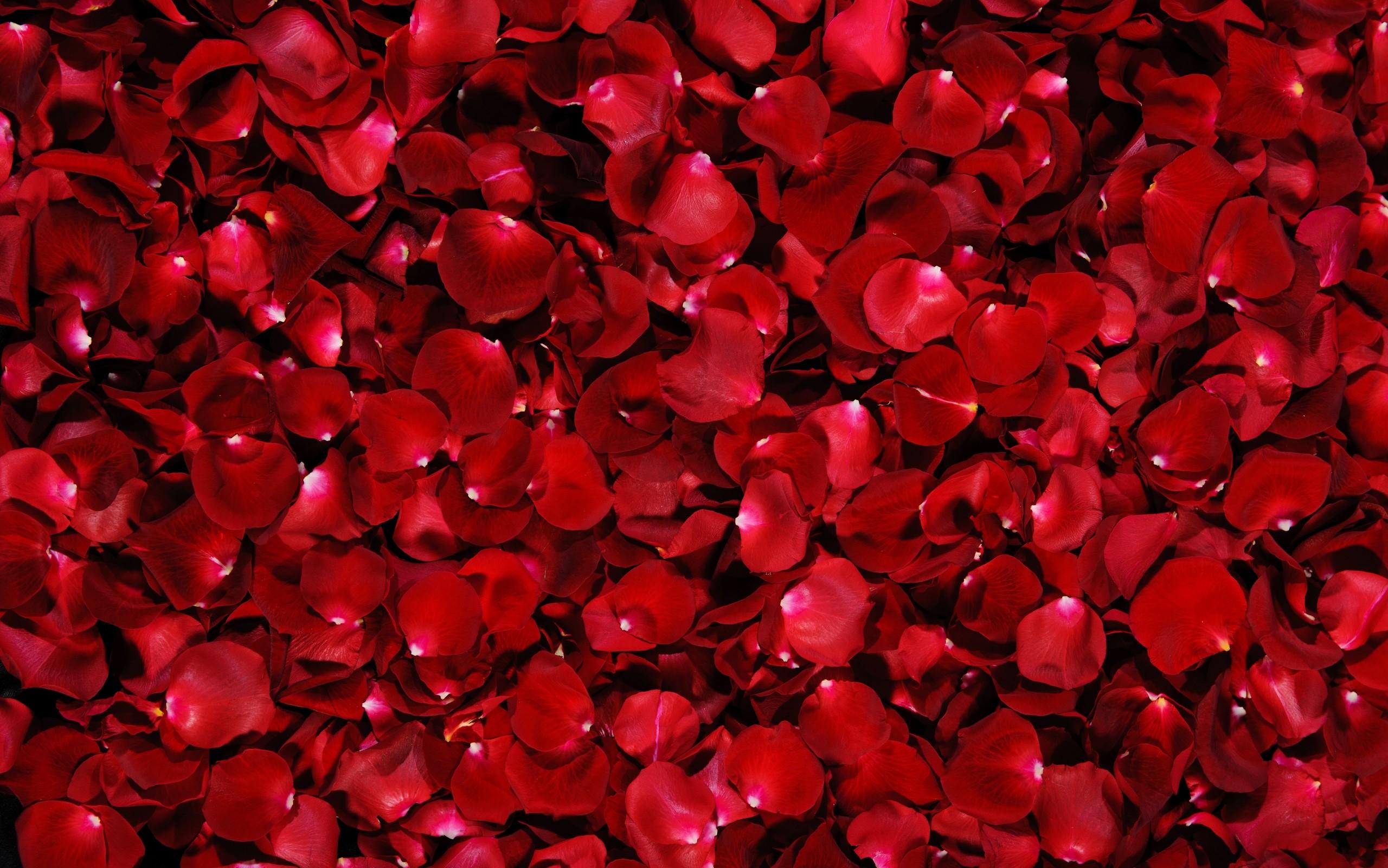 rose petals 25894