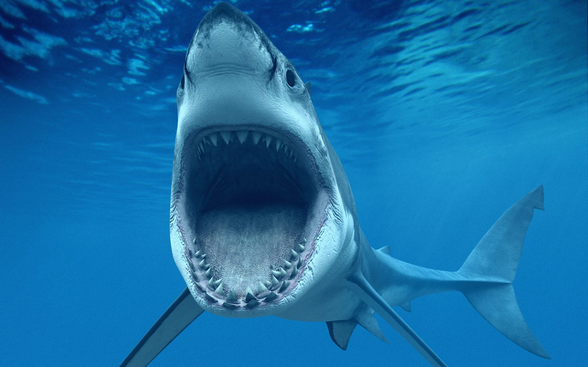scary shark wallpaper 23667