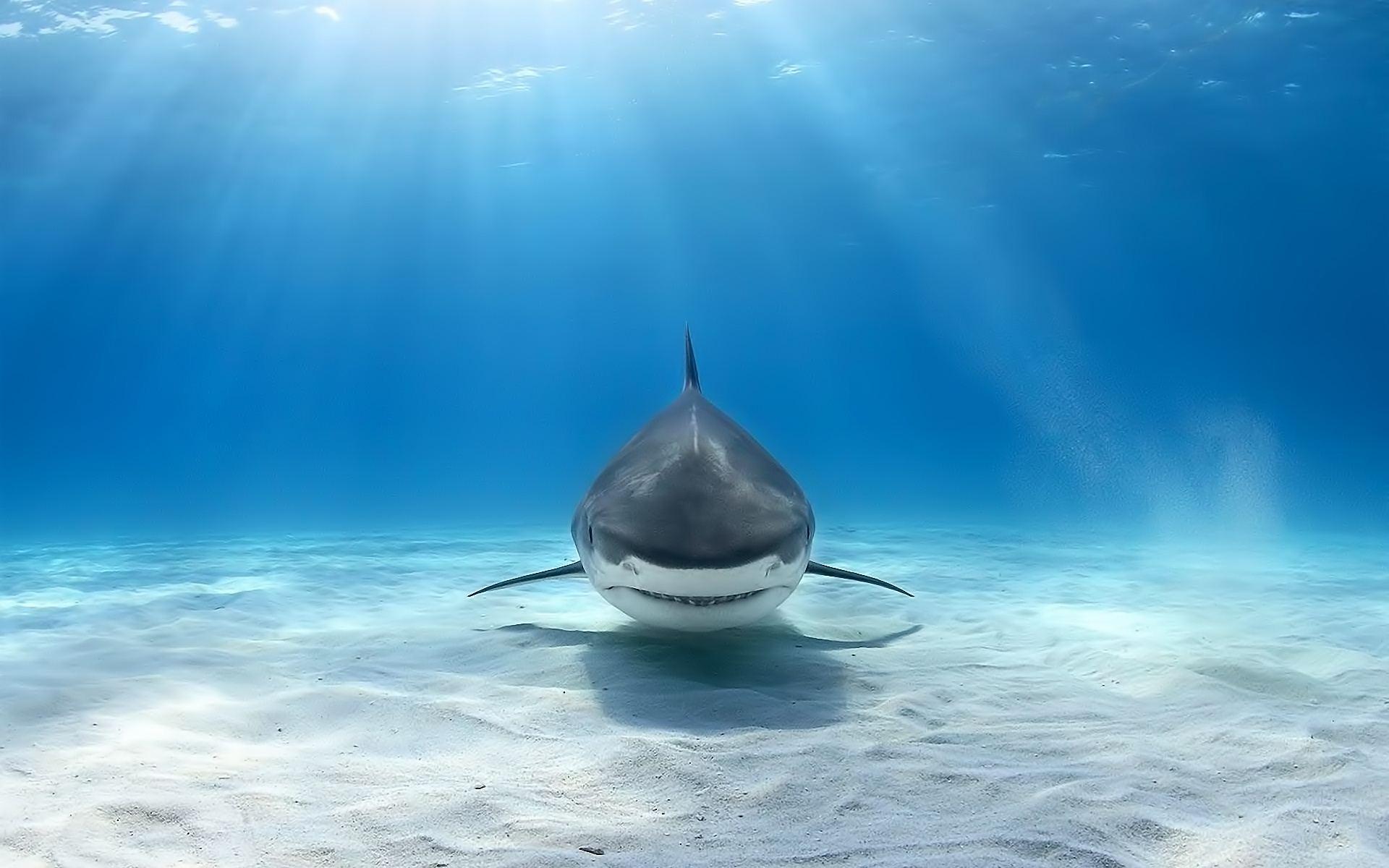 sharks hd 23672
