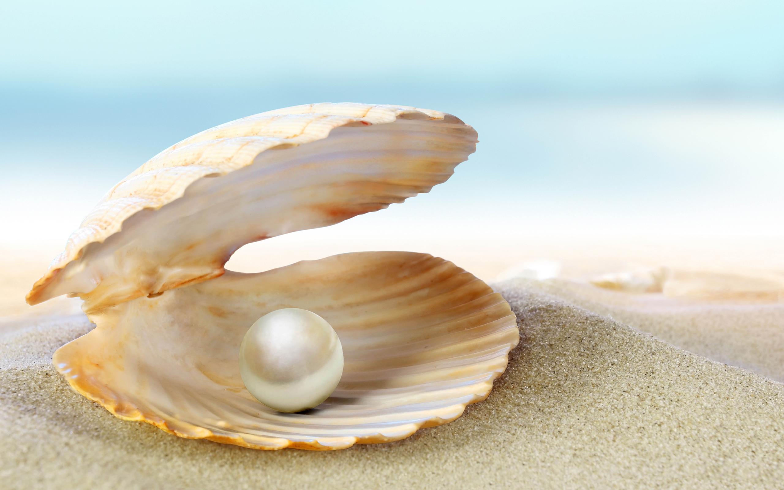 shell 34303