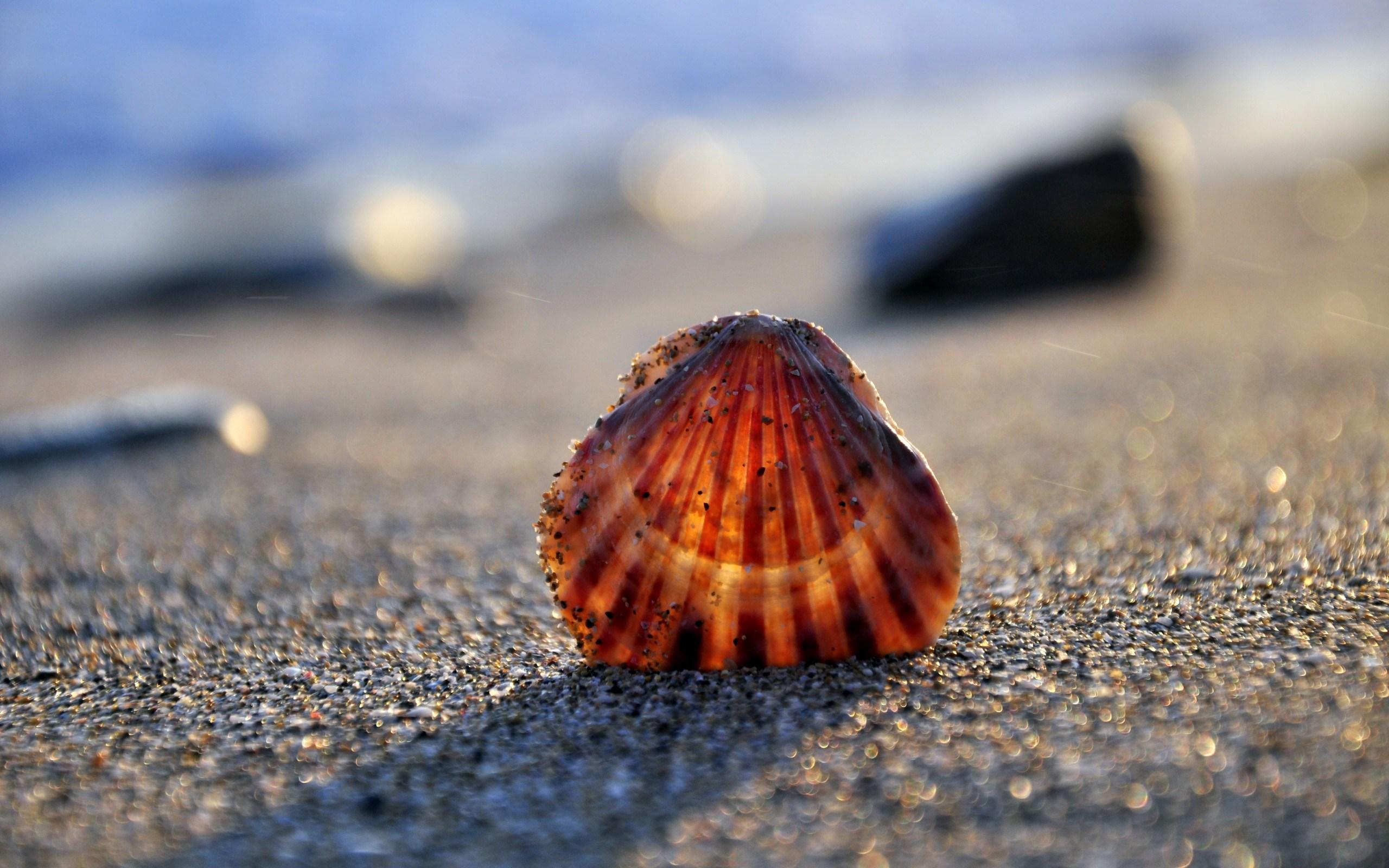 shell hd 34316