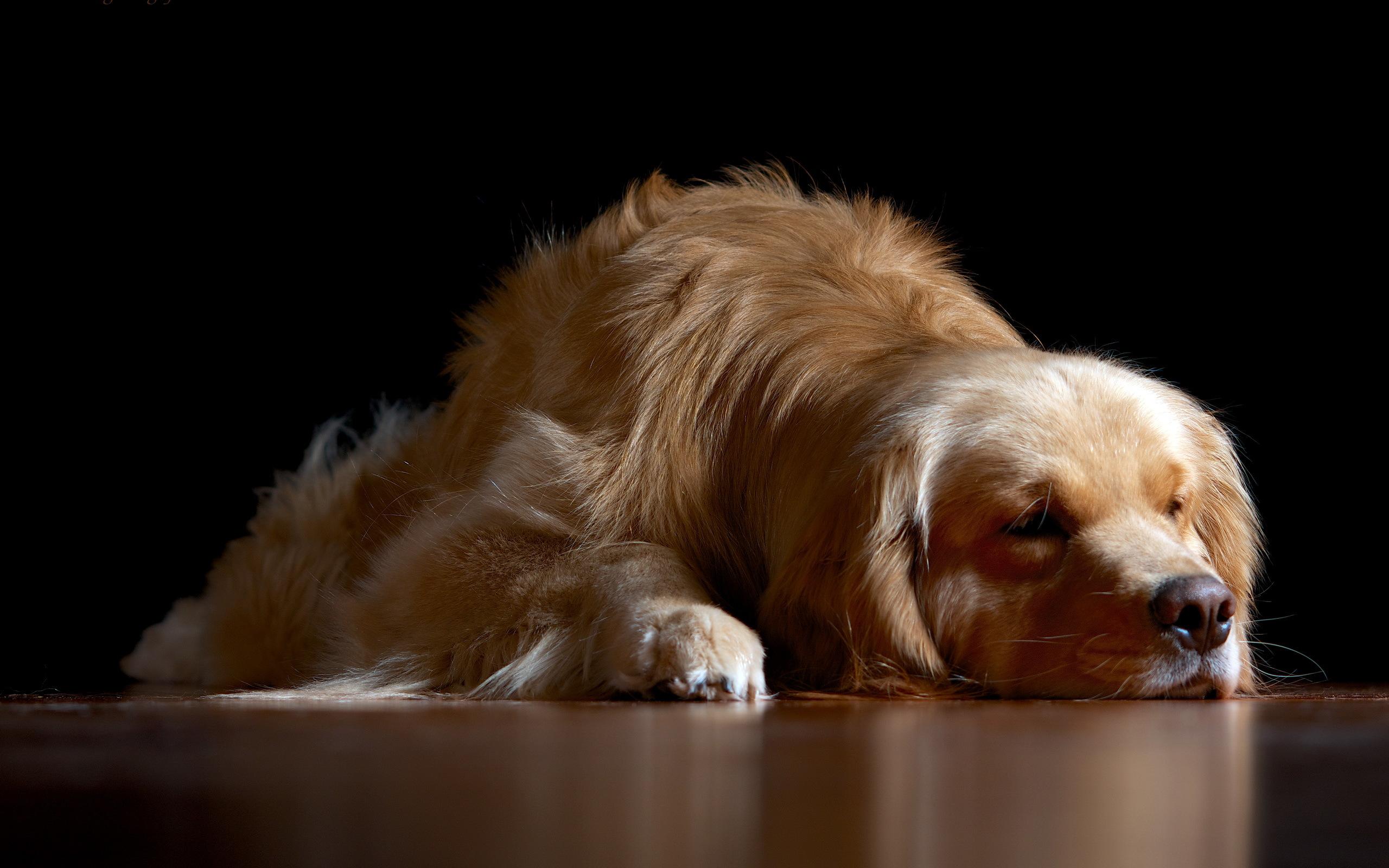 sleeping dog background 40224