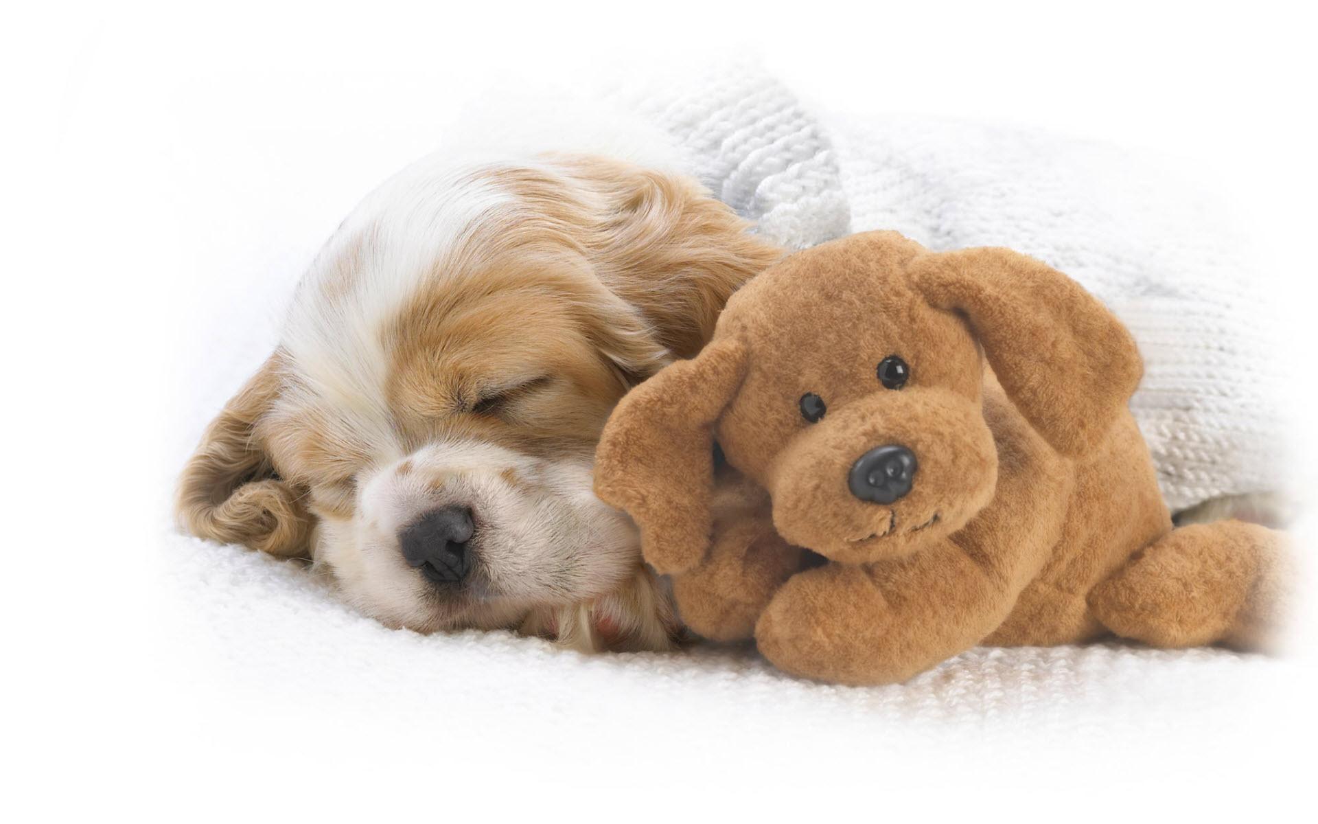 sleeping dog wallpapers 40226