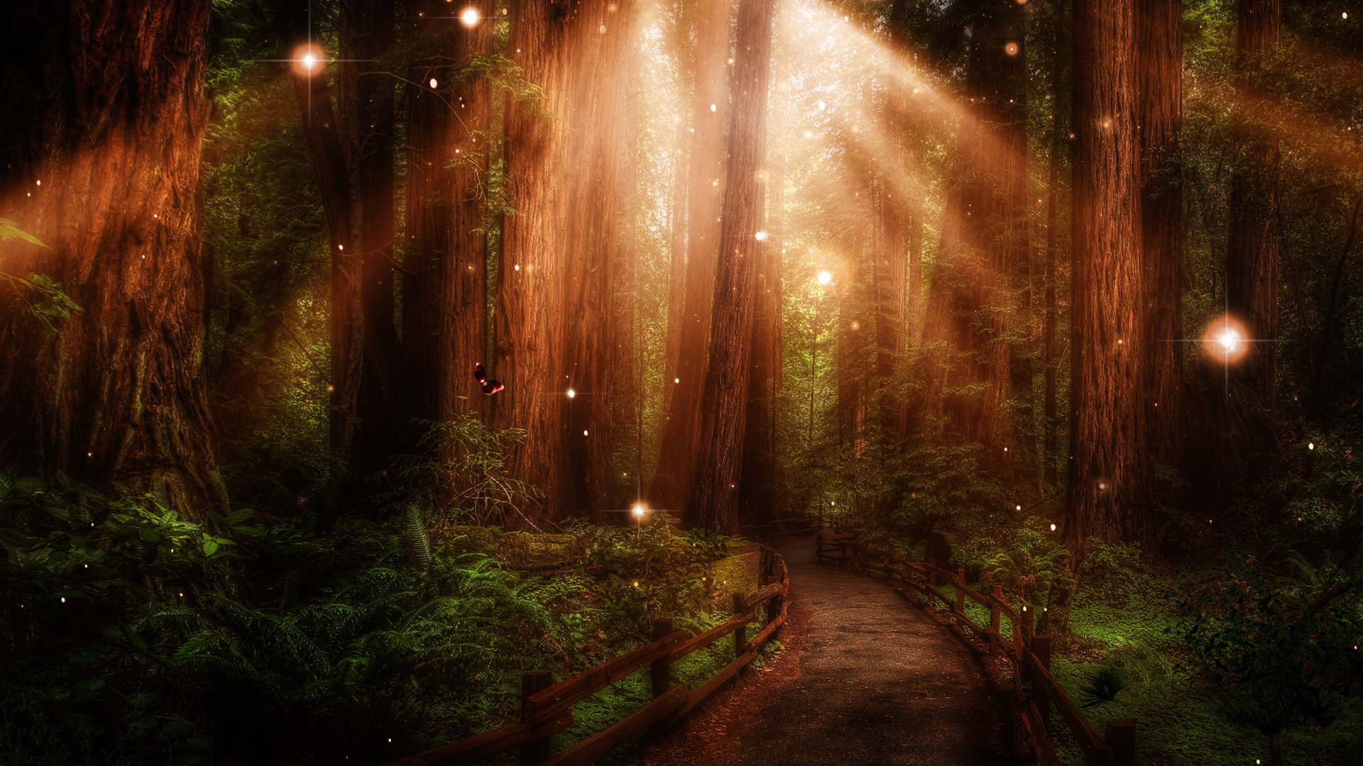 Stunning Forest Path Wallpaper 32574 1920x1080 Px