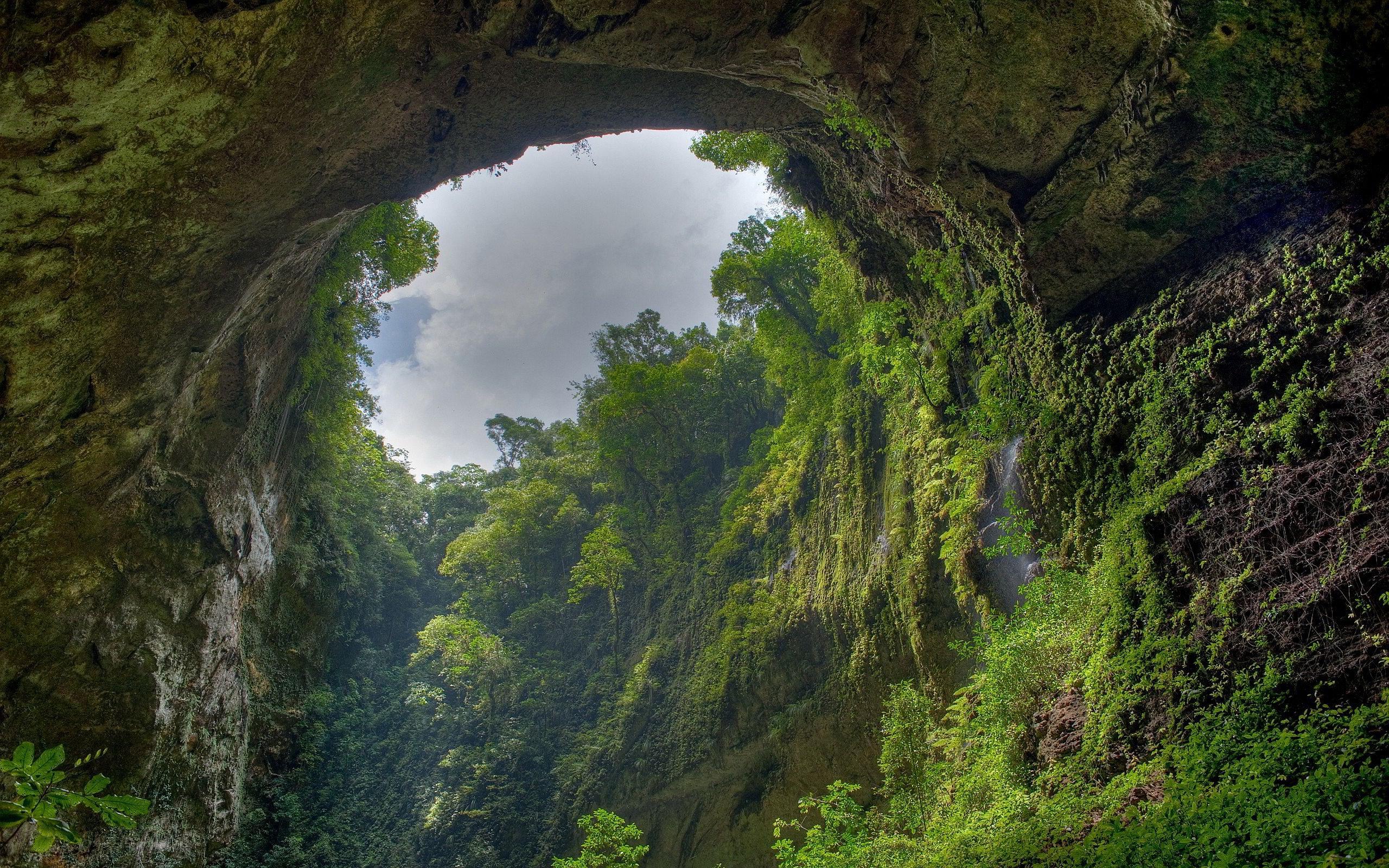 stunning rainforest wallpaper 24478