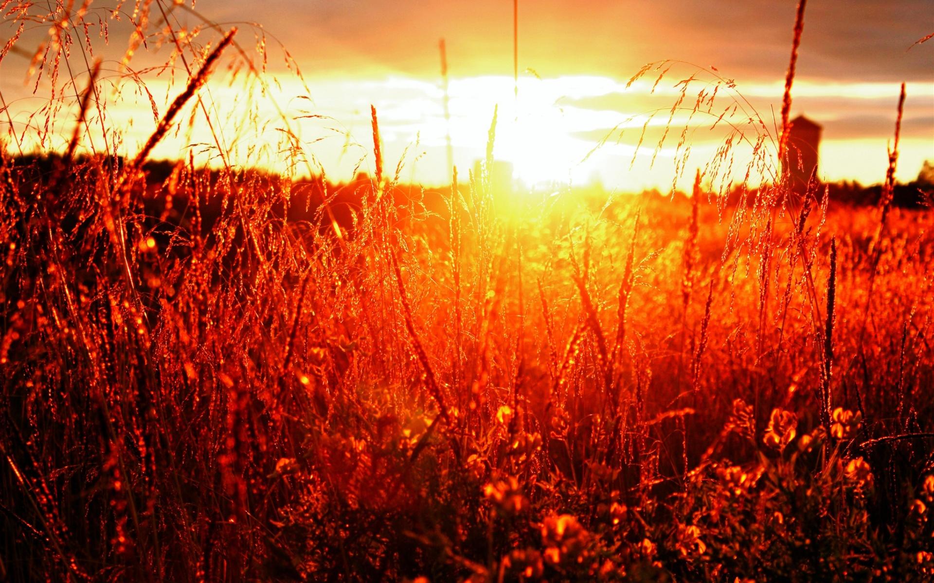 закат небо полевые растения  № 963477 без смс