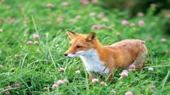 Adorable Baby Fox 34465