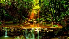 Amazing Forest Stream Wallpaper 34446