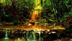 Amazing Forest Stream Wallpaper 34446