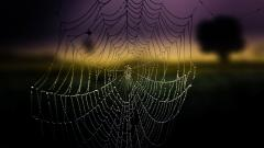 Amazing Spider Web Wallpaper 41576
