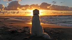 Amazing Sunset Picture 28996