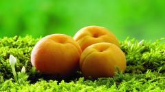 Apricot Wallpaper 32258