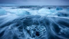 Arctic Pictures 26663