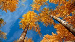 Autumn Wallpaper 13844