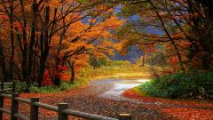 Autumn Wallpaper 13845