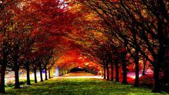Autumn Wallpaper 13847