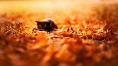 Autumn Wallpaper 13850