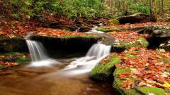 Autumn Wallpaper 13851