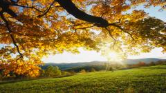 Autumn Wallpaper 13854