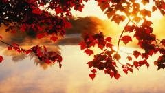 Autumn Wallpaper 13856