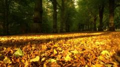 Autumn Wallpaper 13857