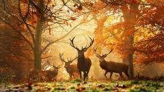 Autumn Wallpaper 13861