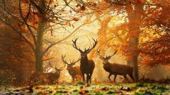 Autumn Wallpaper 13861