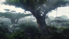 Avatar Wallpaper 23838
