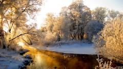 Awesome Forest Stream Wallpaper 34443