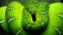 Awesome Snake Wallpaper 29847