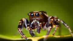 Awesome Spider Wallpaper 41564