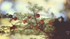 Awesome Spruce Wallpaper 39084