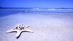 Beach Background 17576