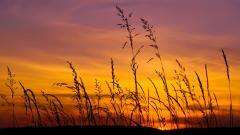 Beautiful Barley Wallpaper 35394