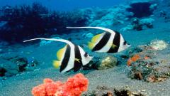 Beautiful Fish Wallpaper 22316